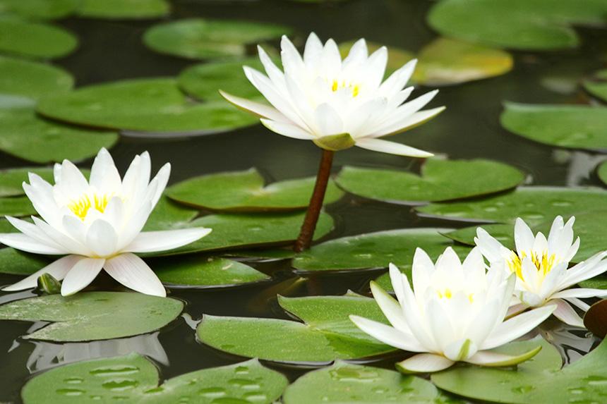 师行道德讲堂:和光同尘,人生智慧